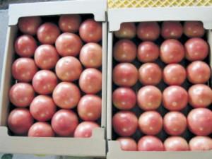 特別栽培トマト
