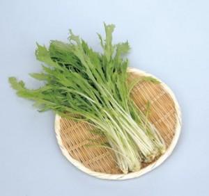 有機サラダ水菜